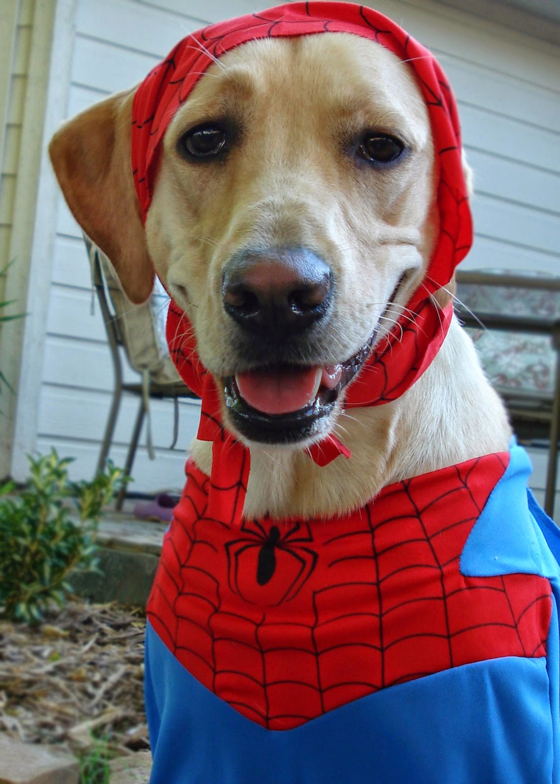 spider-doggy