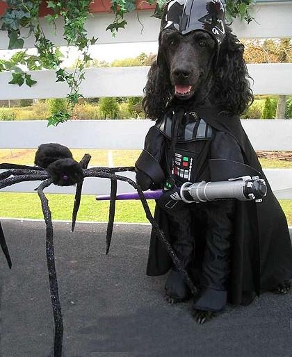 darf-dog