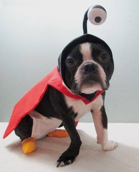 nibbler-dog