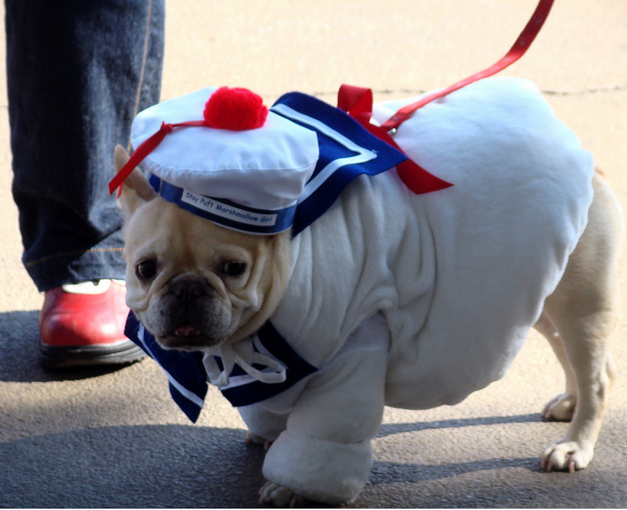 Stay Puft Dog