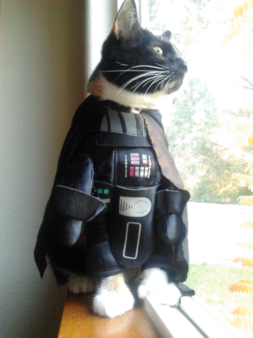 cat-darth