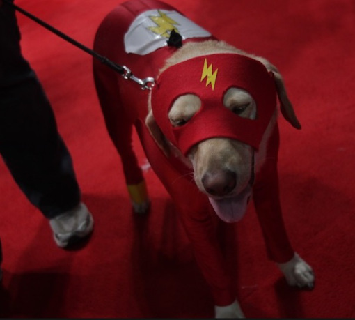 Flash dog