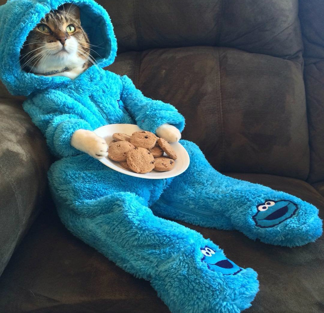 Cookie Cat