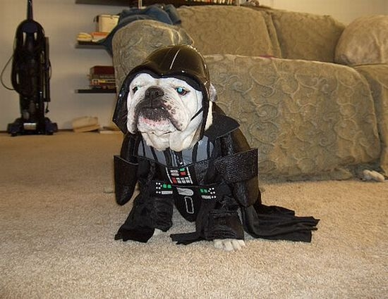 A dog dressed to look just like Star Wars' Darth Vader