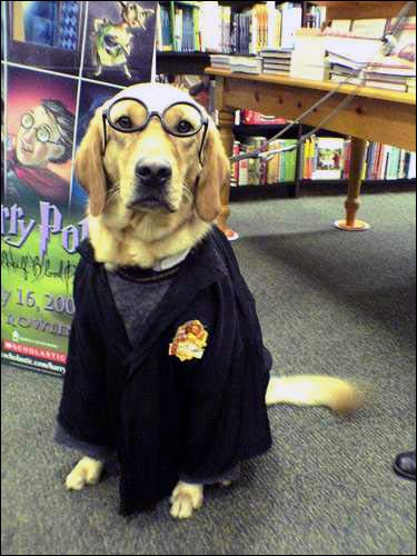 Little Hairy Potter looks ready for his first day at Hogwarts