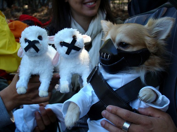 A dog posing with some toy sheep as Dr. Hannibal Lecter
