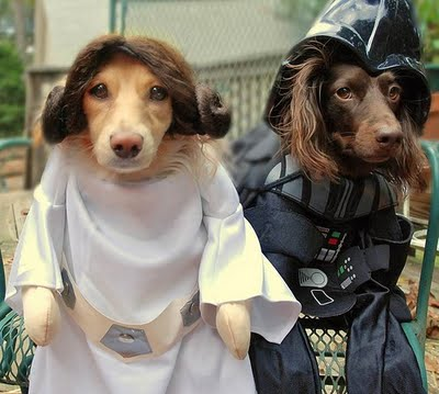 Star Wars Dogs are always fun. What do you think of these guys?