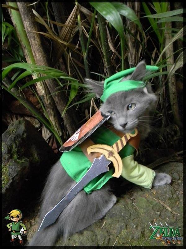 Zelda_cat_cosplay