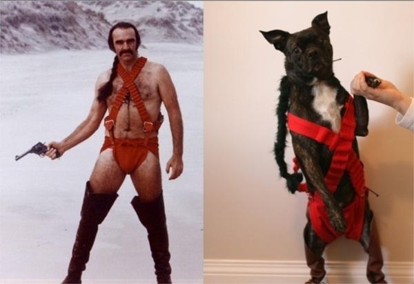 cosplay dog