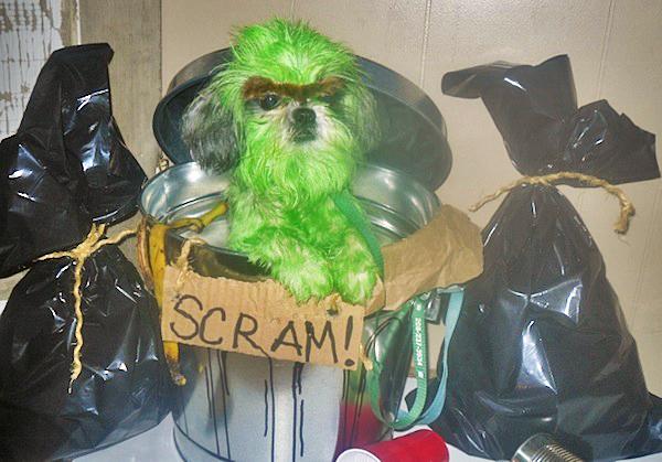 oscar-the-grouch-dog-costume