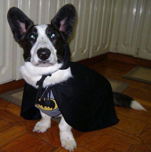 Big eared Bat Dog