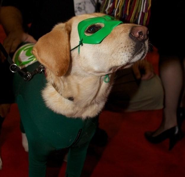 Green Lantern - Dog Cosplay