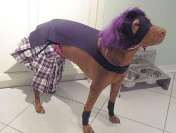 Hit-girl - Dog cosplay