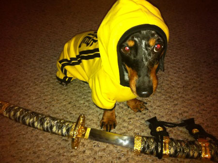 Kill Bill - dog cosplay