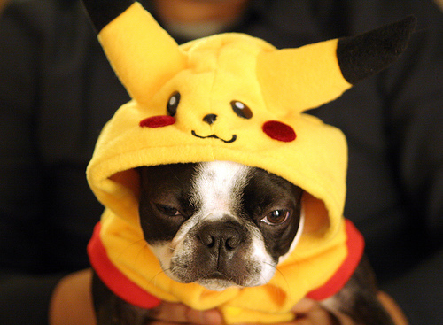 pokemon dog cosplay