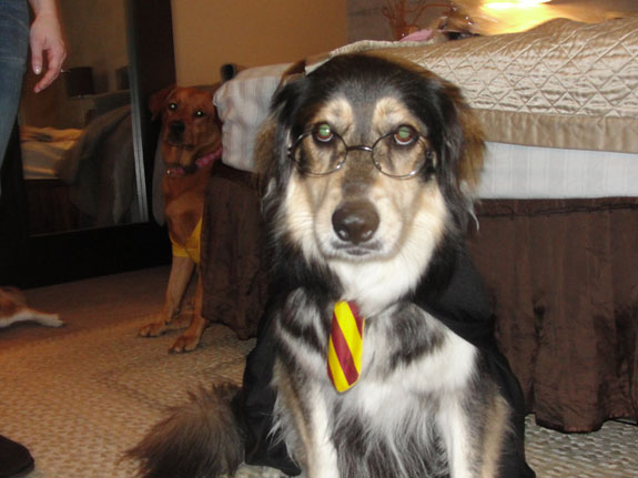 harry-potter-dog-cosplay