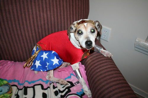 wonder-woman-dog
