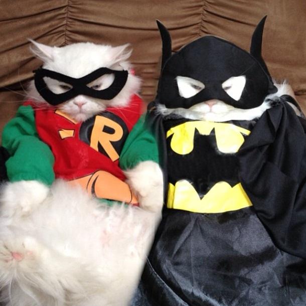 Superhero-cat-robin-n-batman