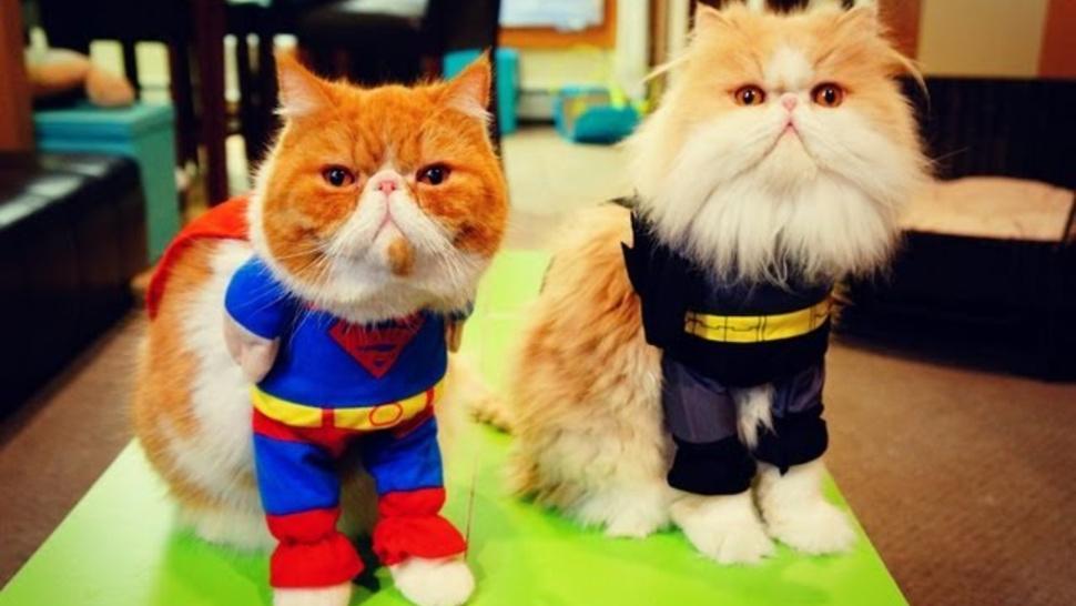 batman-superman-cats