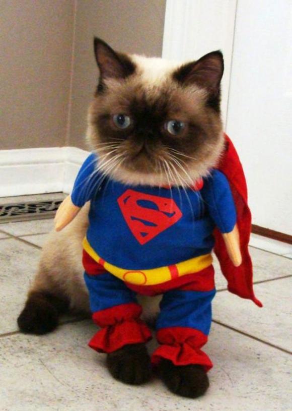 cat-dressed-as-superman