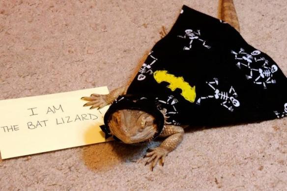 liazard-dressed-as-batman