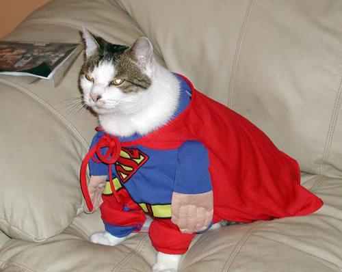 cat-superman-cosplay