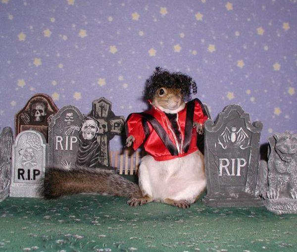 MJ Squirrel