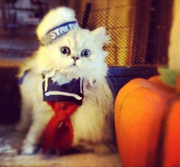 stay-puft-ghostbusters-cat