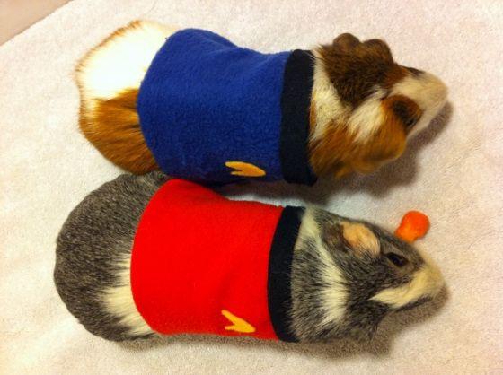 Star Trek Guinae pigs