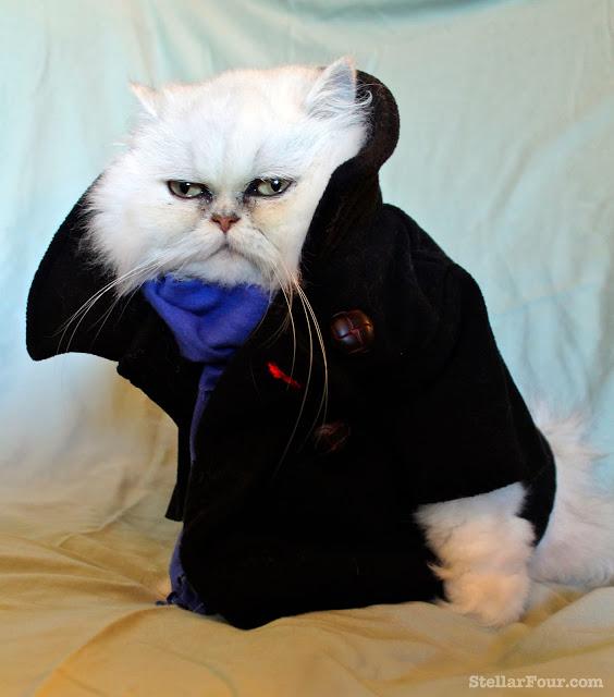 Sherlock Cat