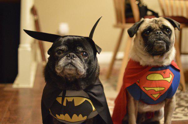 Superman Batman dogs