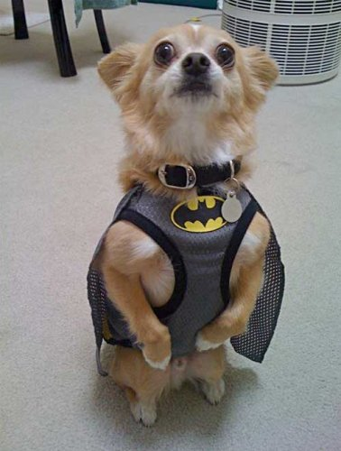 Batdog is a standup guy