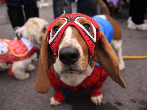 Spiderman dog