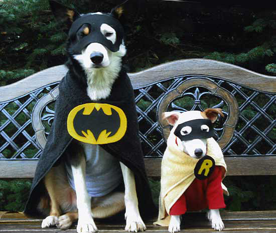 batman-robin-pair