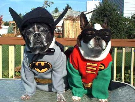 Batty and Robbo dogs