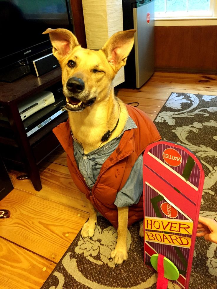 back-to-the-future-dog